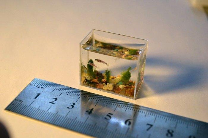 Самый маленький в мире аквариум с рыбками (6 фото)