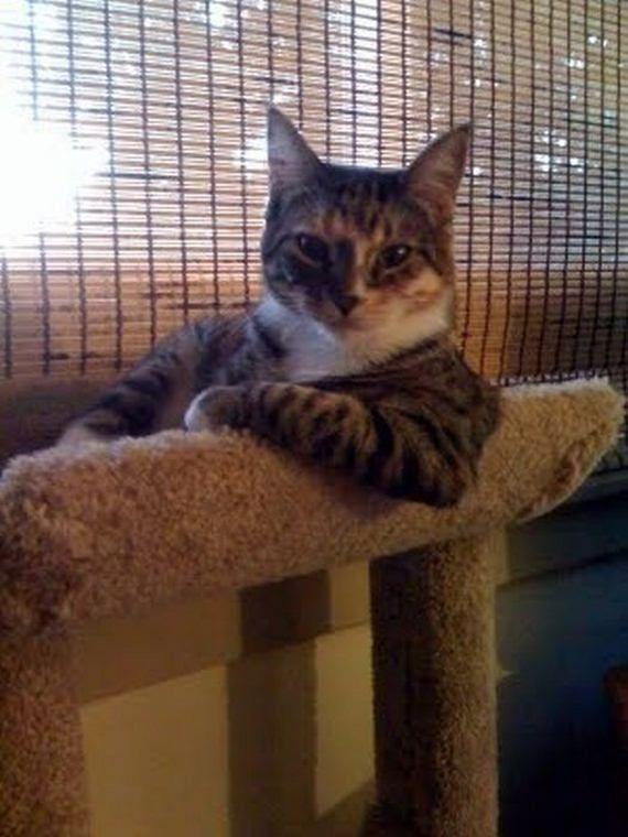 Коты отдыхают (45 фото)